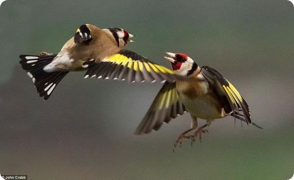 Летающие птицы в саду Сомерсета