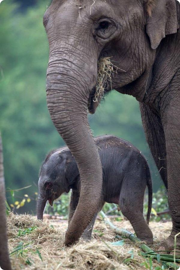 Зоопарк Дублина представил третьего слоненка