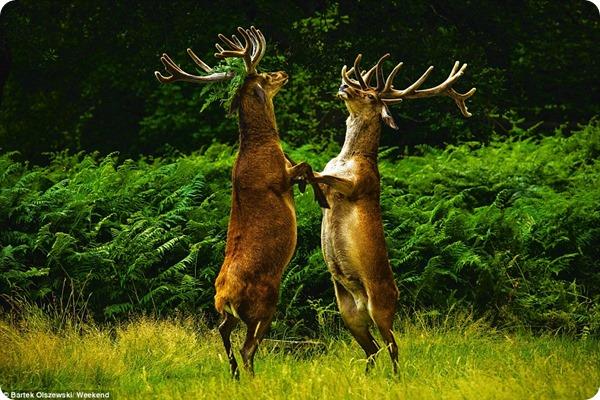 Конкурс любительской фотографии о дикой природе
