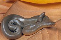 Резиновая змея