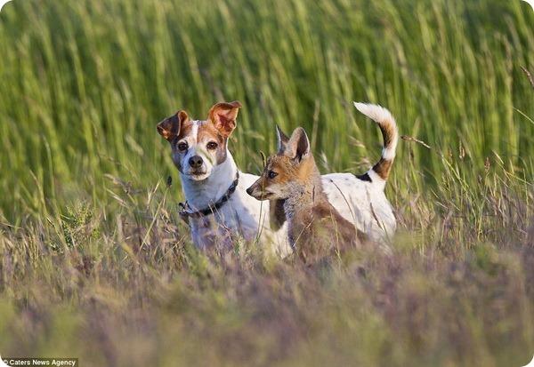 Животные-друзья: трогательные фотографии со всего мира