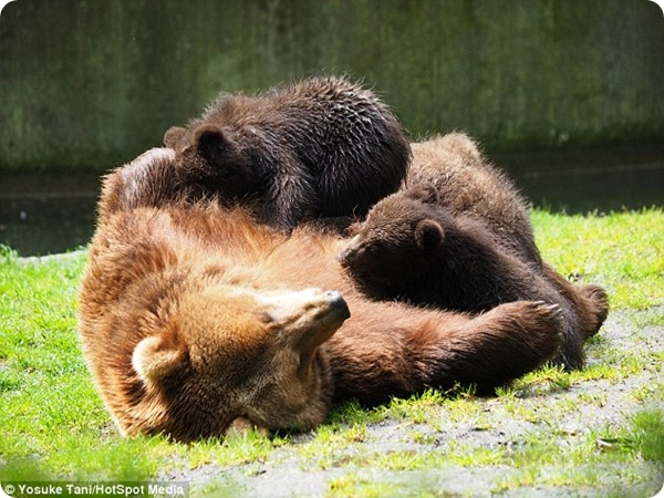 Веселые медвежата из зоопарка зоопарк Гагенбек