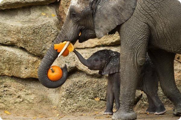 Хэллоуин для животных из разных зоопарков мира