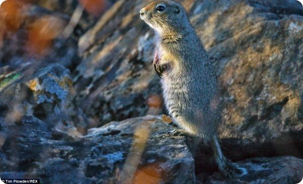 Дикие животные Аляски в фотографиях Тима Плаудена