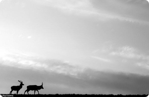 Мир млекопитающих Великобритании в фотографиях