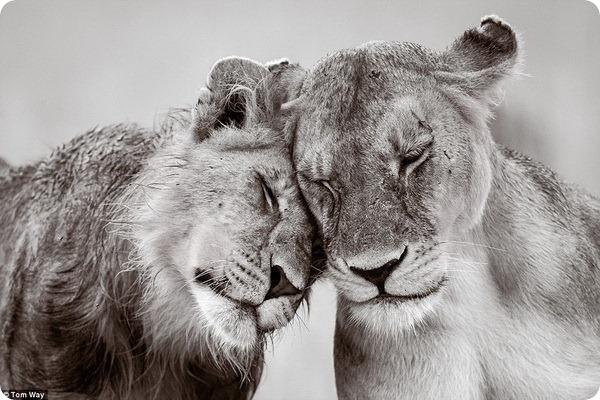 Фотоконкурс премии Зоологического общества Лондона 2015