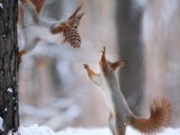 Игривые белки от российского фотографа Вадима Трунова
