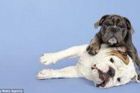 Проект Шайны Фриман «Между двумя собаками»