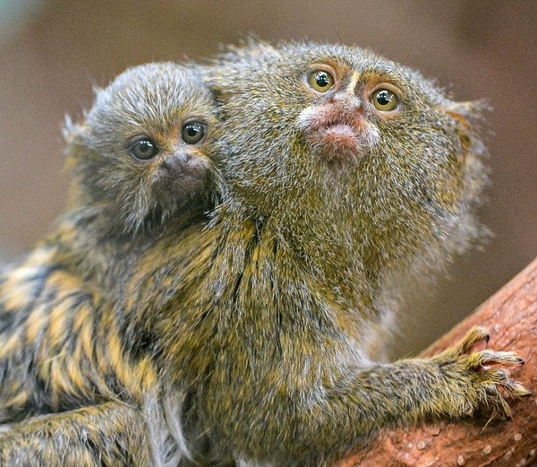 ZooPicture.ru: сайт о животных с фотографиями и описанием.