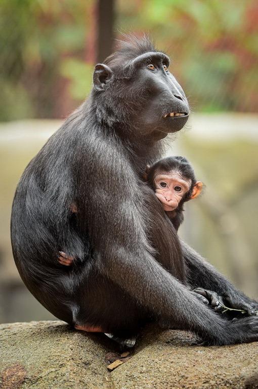 Фотки обезьян