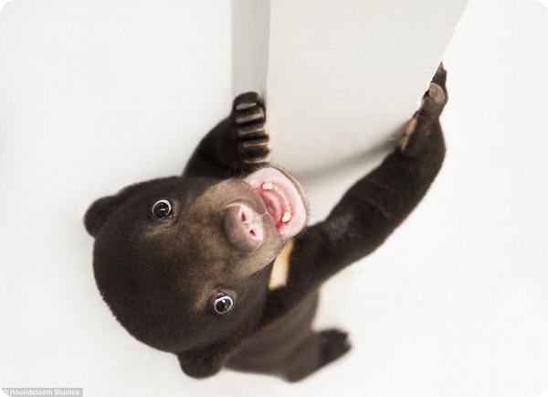 Первая фотосессия медвежонка Арьи из Камбоджи