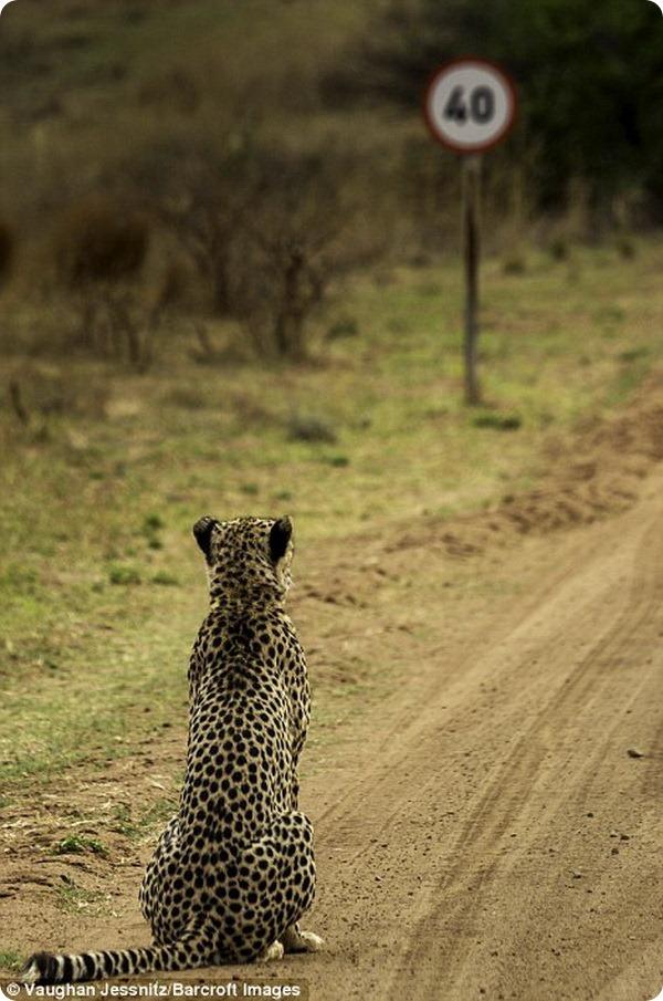 (Tarangire National Park)