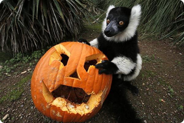 Хэллоуин в зоопарках мира 2016