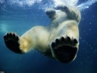 Крупным планом: захватывающие фото самых опасных животных