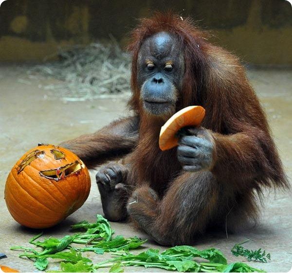 Как встречают Хэллоуин животные в зоопарках по всему миру