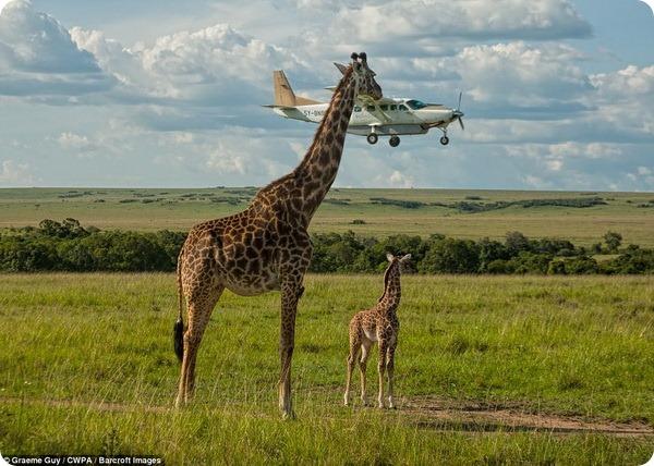 Лучшие работы Comedy Wildlife Photography Awards 2017