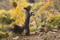 Танцующая белка от фотографа Евгении Лёвиной