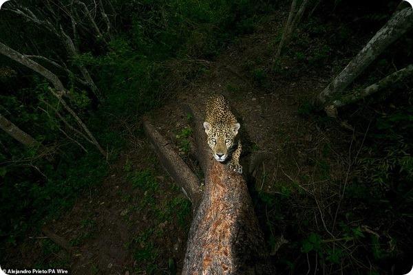 Лучшие работы «Фотограф года живой природы 2018»