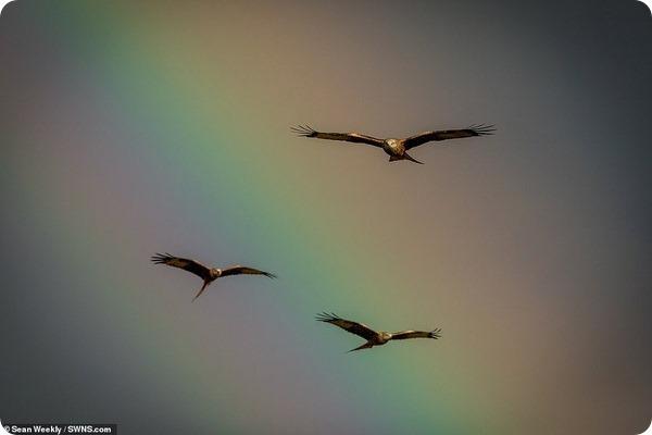 Красные коршуны на фоне радужного неба