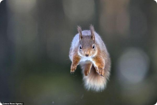 Белки-супермены от фотографа дикой природы Пита Уокдена