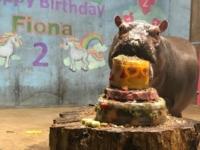 Бегемоту Фионе из зоопарка Цинциннати исполнилось два года