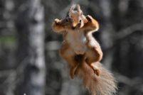 Белки в прыжке от фотографа Гэри Брюса