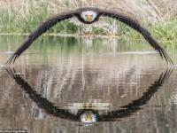 Огромная хищная птица смотрит прямо в камеру фотографа