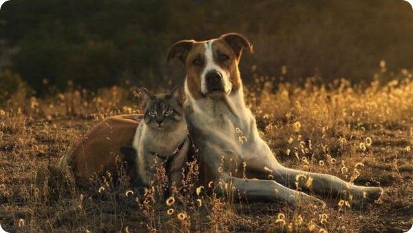Генри и Балу: лучшие друзья путешествуют вместе по Колорадо