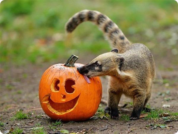 В зоопарках мира животным устроили празднование Хэллоуина