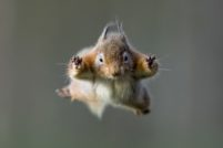 Снимок белки в прыжке от фотографа Энди Ховарда