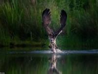 Лучшие фото животных из национальных парков Великобритании