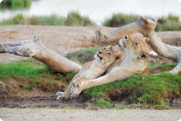 Мир дикой Африки от фотографа Анетт Моссбахер