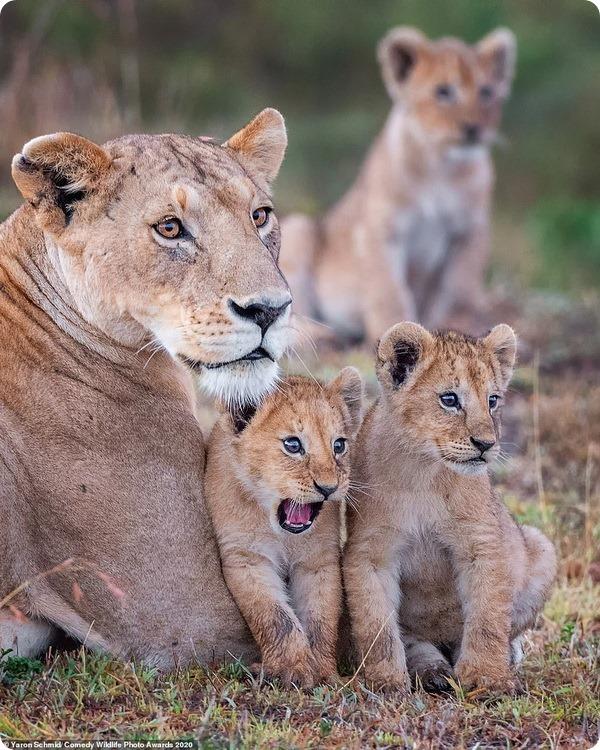 Фотоконкурс Comedy Wildlife Photography Award 2020