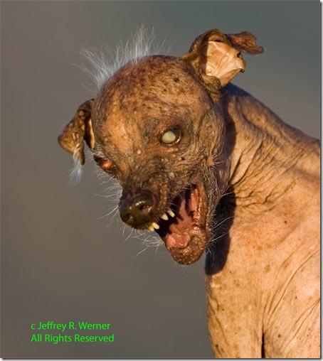 Самая страшная собака 2009.