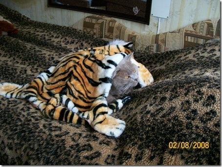 Витязь в тигровой шкуре (Руставели Ш.) Витязь в тигровой шкуре.