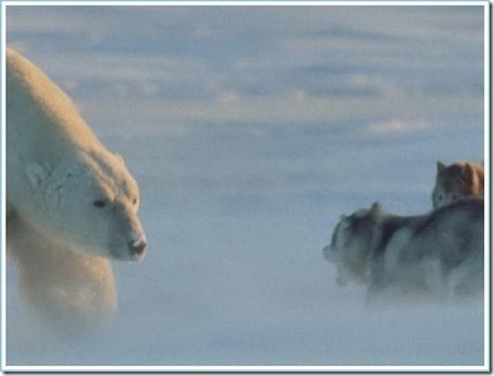Медведь против собак