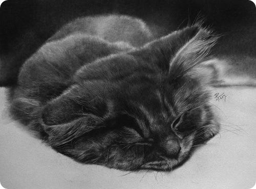 Кошки Paul Lung