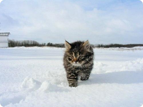 Годовалый ребенок выжил, согреваемый бездомными кошками