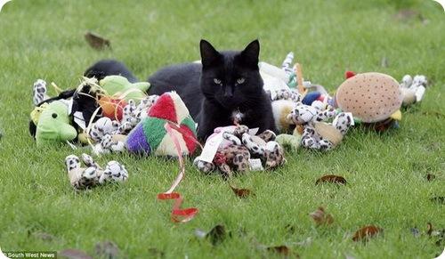 Фрэнки: Кот-клептоман