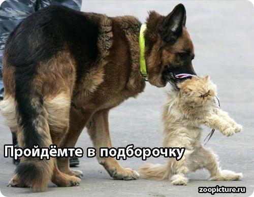 Истории про говорящих кошку и собаку. Продолжение.
