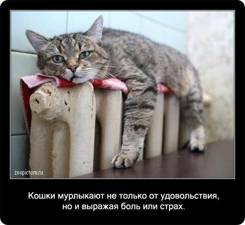 Интересные факты о кошках. стр.2.