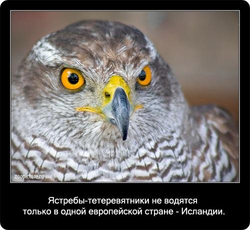 Интересные факты о животных 98103