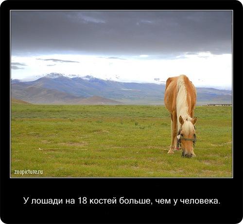Интересные факты о животных 35465