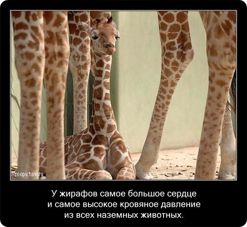 Интересные факты о животных 65848