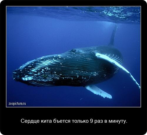 Интересные факты о животных 32406
