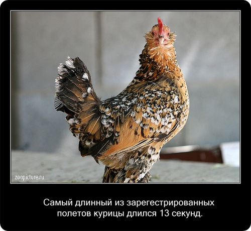 Интересные факты о животных 63774