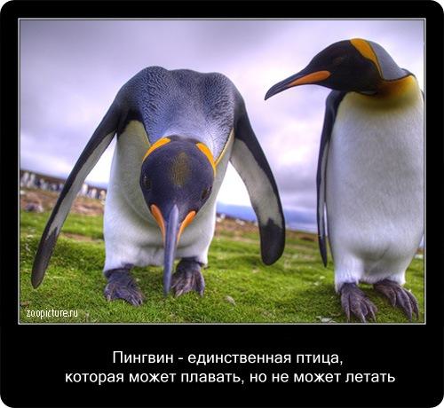 Интересные факты о животных 64190