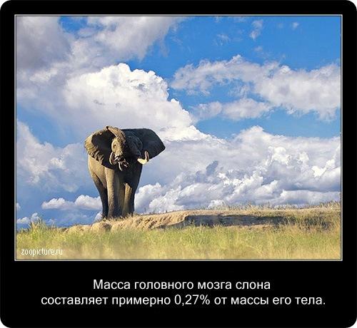 Интересные факты о животных 62822