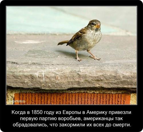 Интересные факты о животных 34877