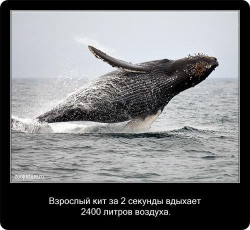 Интересные факты о животных 49378